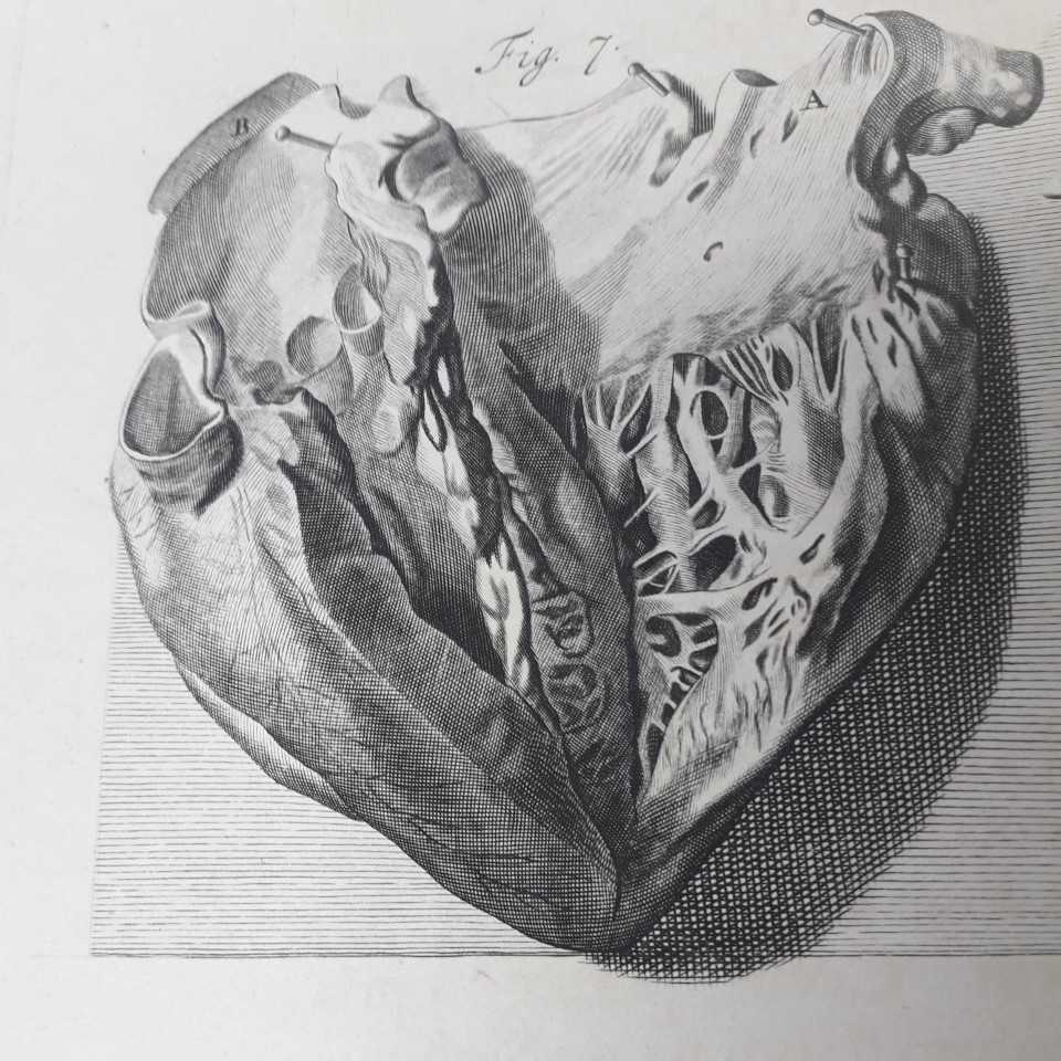 Featured image of Heart 3