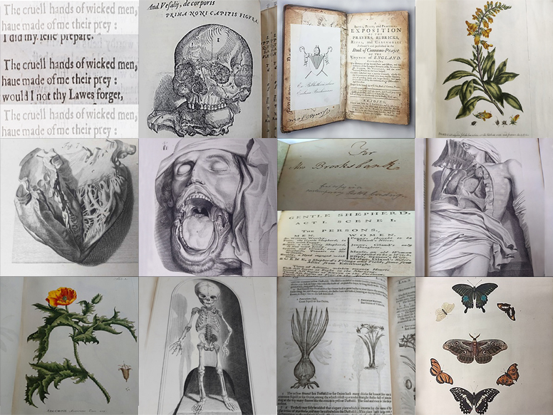 Image for A Cabinet of Curiosities: Reimagining Rare Books