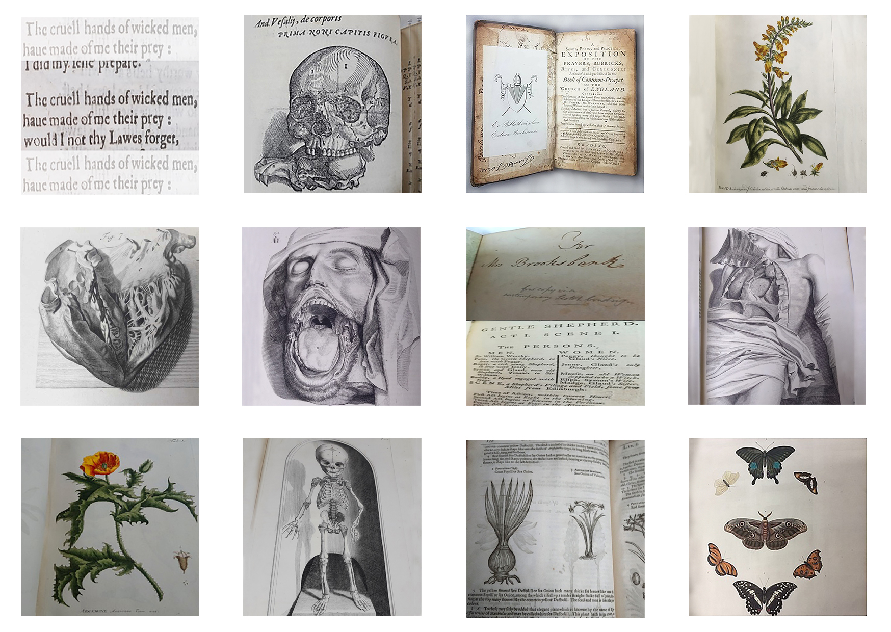 Featured image of A Cabinet of Curiosities: Reimagining Rare Books