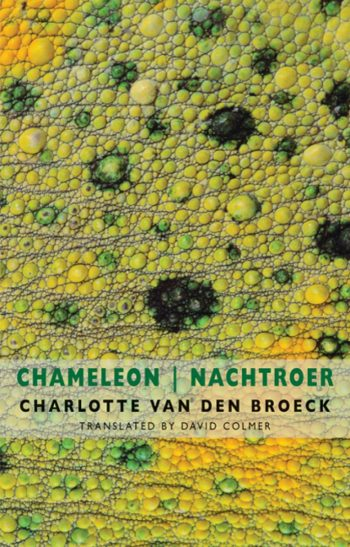 Featured image of Chameleon | Nachtroer